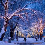 Snowy Stroll